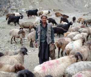 A Kuchi man stands amidst his herd of goats.