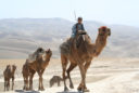 A Kuchi boy rides a camel through rural Afghanistan.