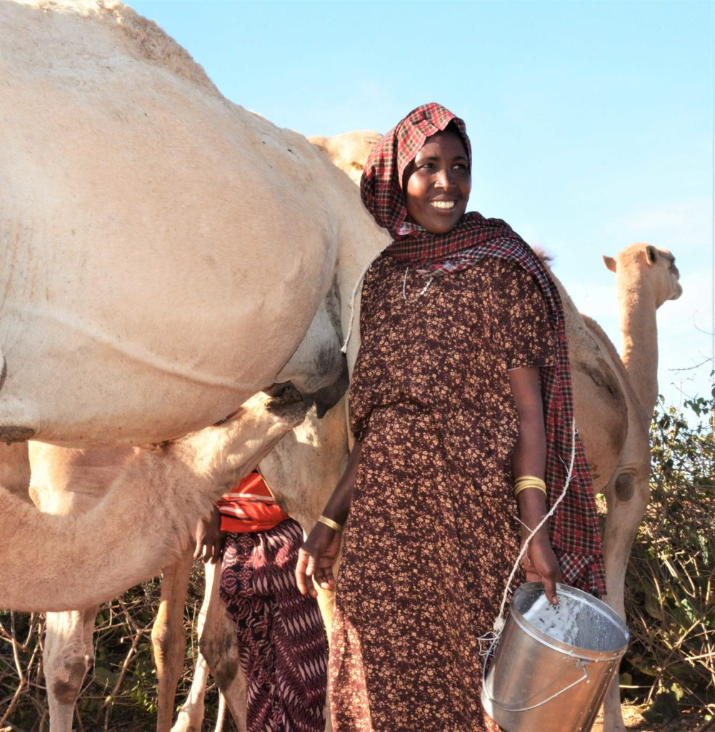 A woman holds a milk pail beside her camels.