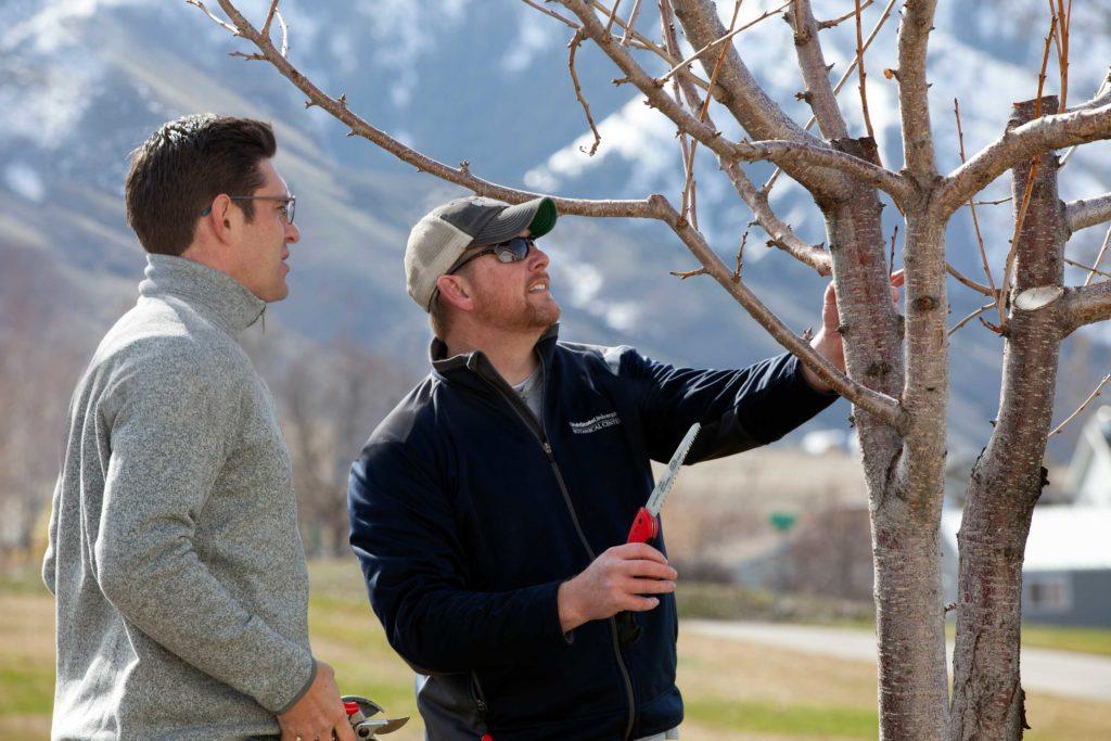 Two men prune a tree.