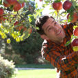 man looking at an apple tree