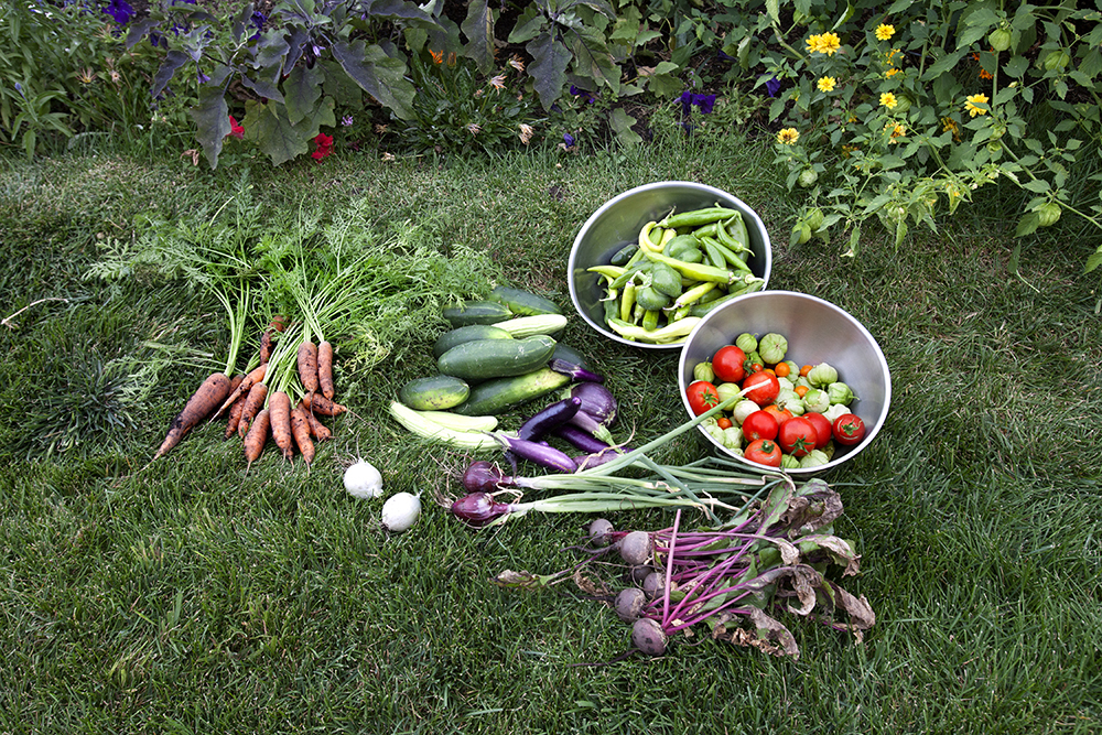 Vegetables laying on grass