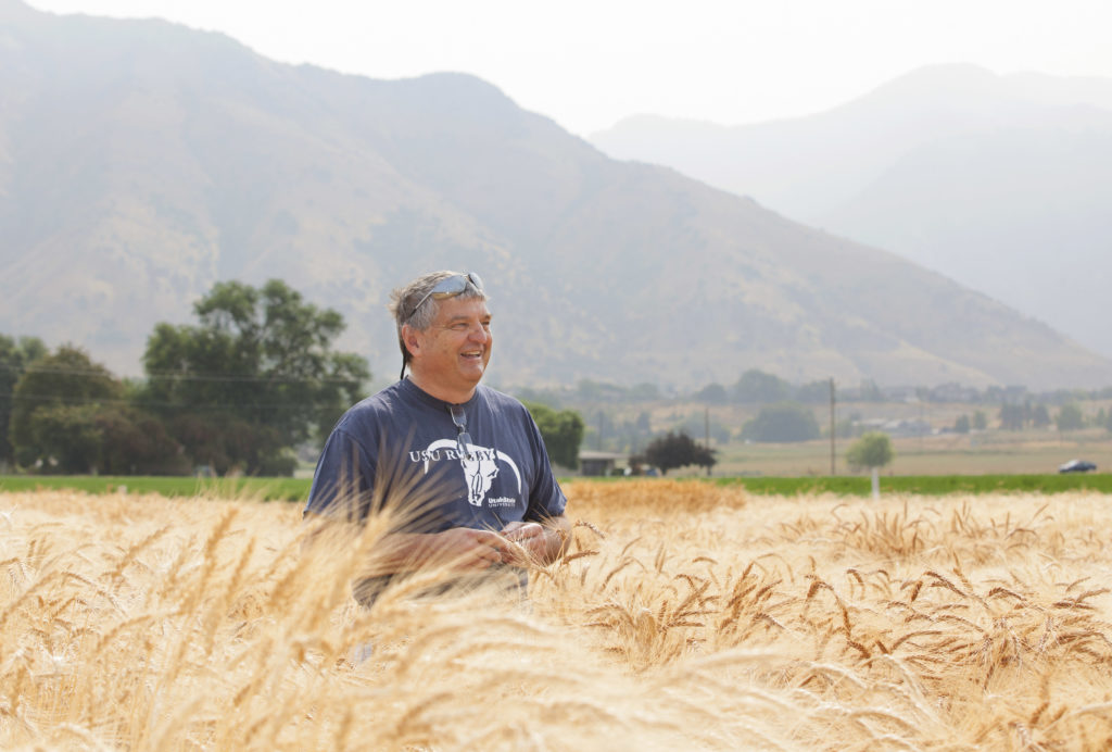 David Hole standing in a wheat field