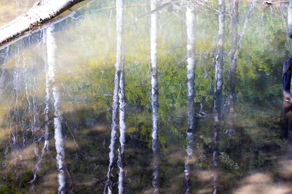 Aspen stems reflected in a dammed portion of Birch Creek in Preston, Idaho.