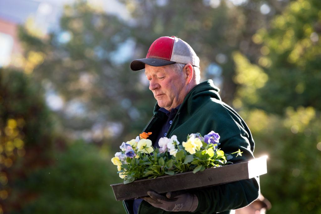 A man carries a tray of pansies