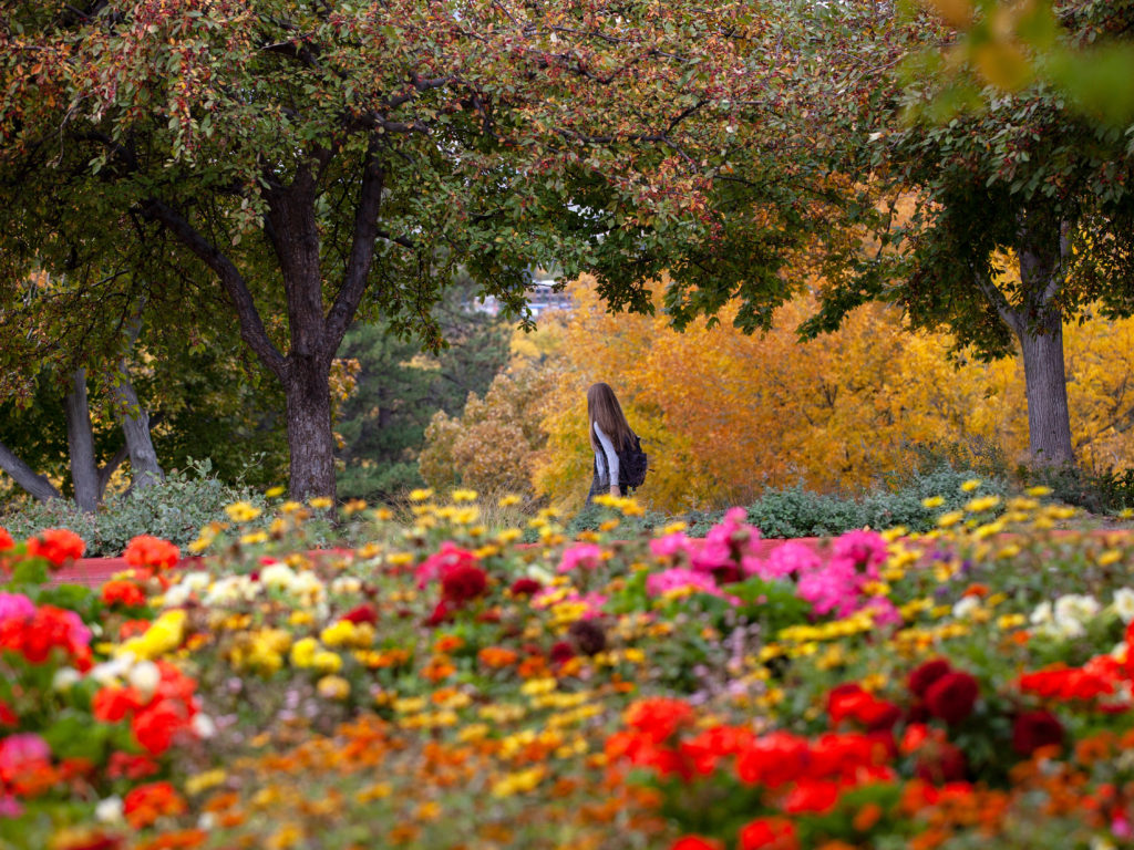 a girl walks across campus framed by bright flowers and yellow leaves