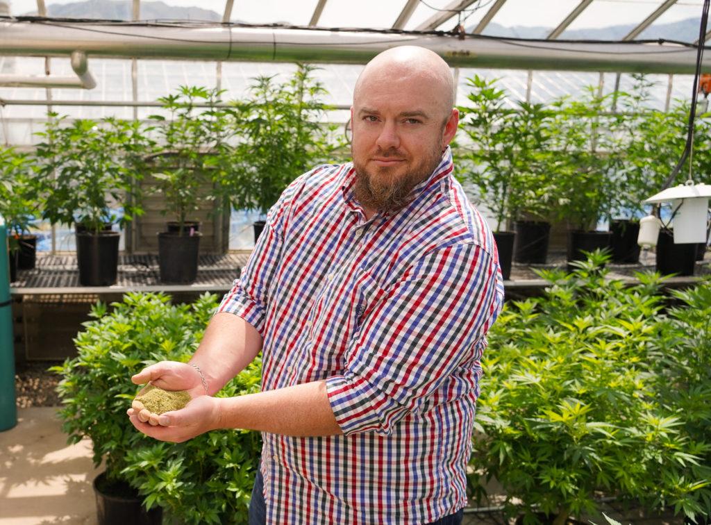 a man holds hemp buds in a greenhouse