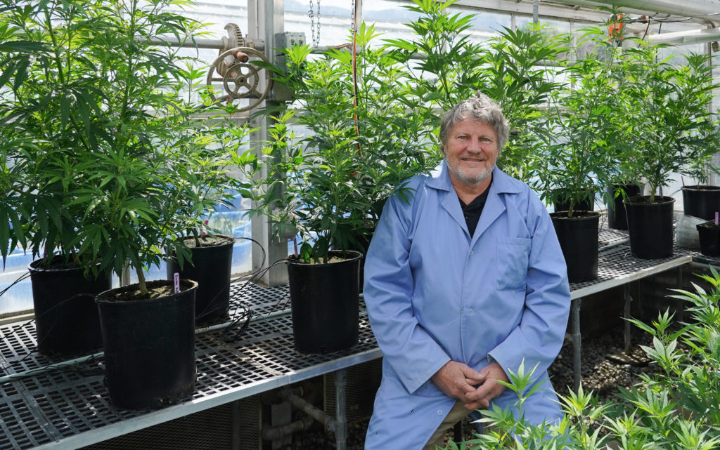 a man in a lab coat sits amongst the hemp plants in a greenhouse