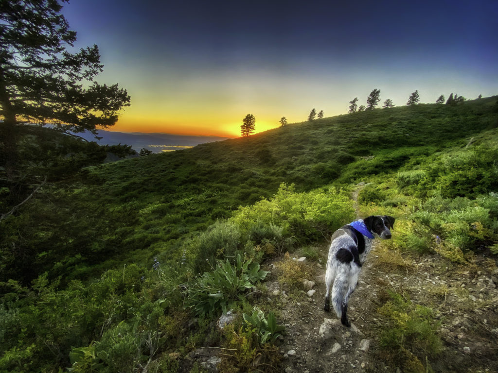 a dog walking a trail at sunset