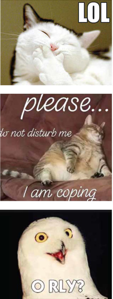 """Three internet memes: Top image of a cat with its paw over its mouth and block writing LOL; second image is a fat cat asleep on the couch with writing """"pleasee.... do not disturb me, i am coping""""; and a third image of a white owl with the words O RLY in block text"""