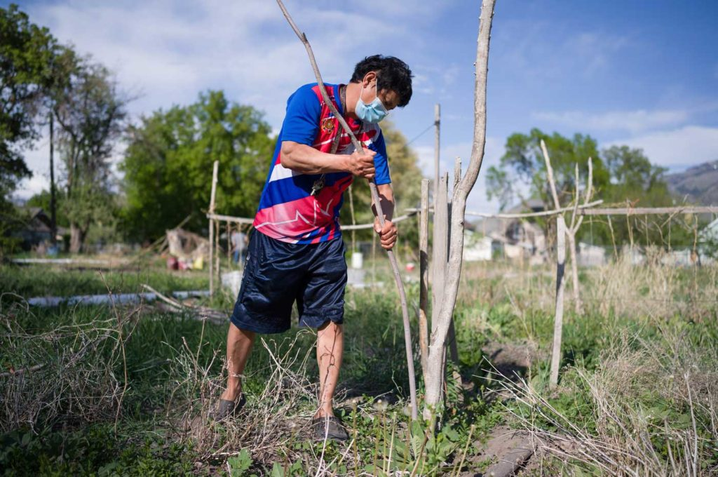 a masked Asian man pushes long sticks into the ground as he prepares his garden plot in early spring.
